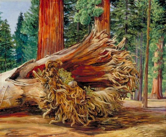 a-fallen-giant-calaveras-grove-california-1875.jpg!Large.jpg